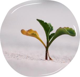 generates growth